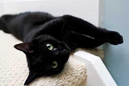 Dag van de Zwarte Kat